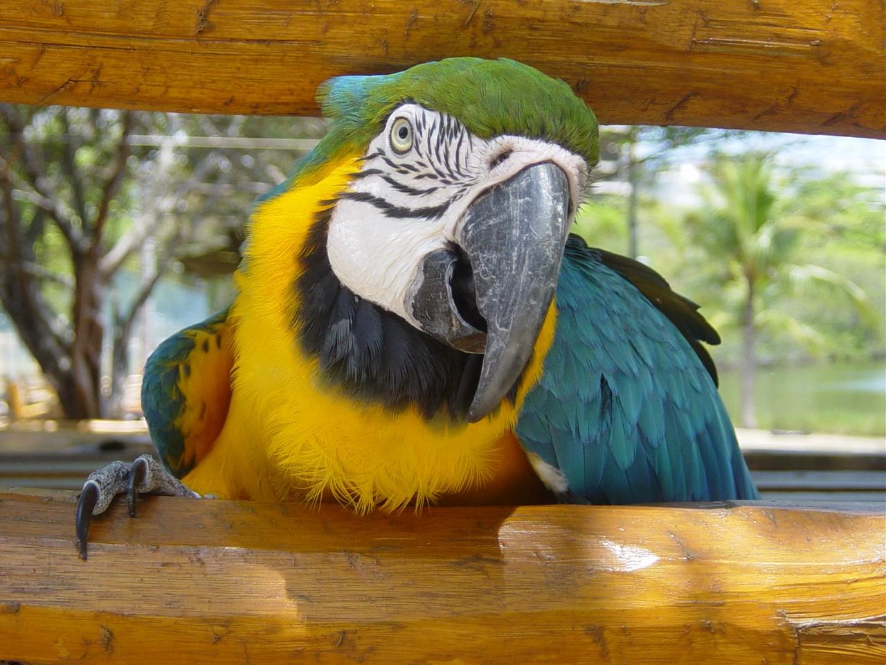 Jardim Botanico de Curtiba – Brazylia