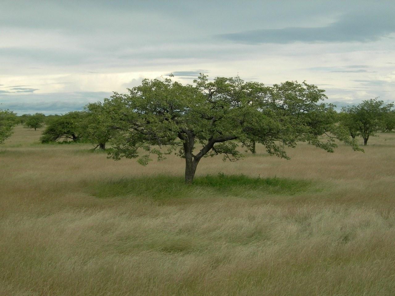 Ogród Botaniczny Kirstenbosch – RPA